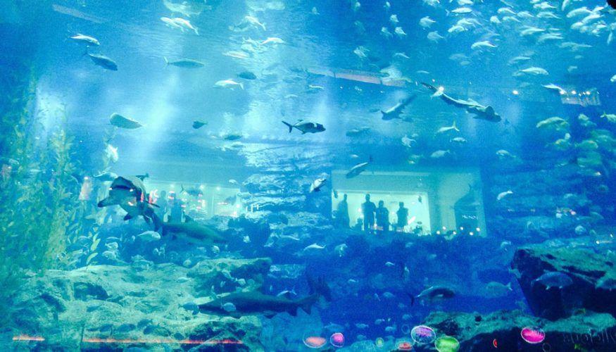 aquarium-de-dubai
