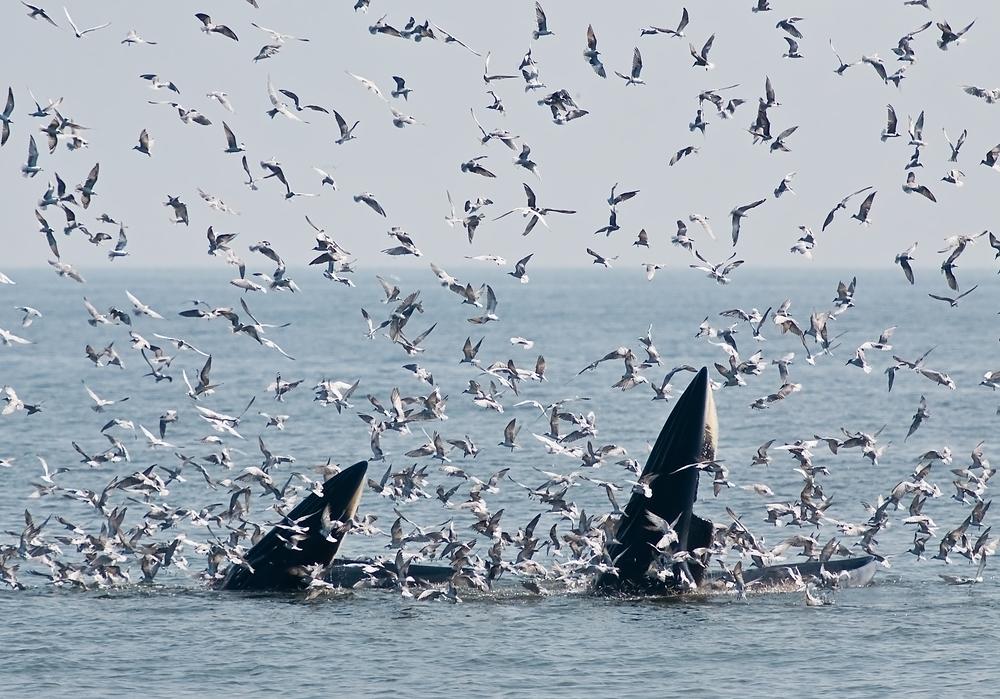 La Nouvelle-Zélande annonce la création d'un immense sanctuaire marin