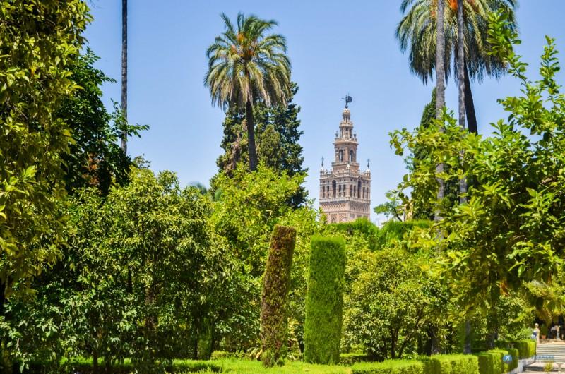 Cathedrale depuis le jardin de l'Alcazar