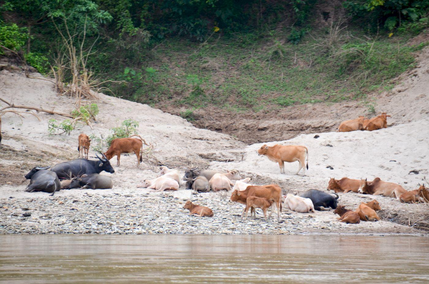 https://blogvoyages.fr/wp-content/uploads/2018/01/Mekong-laos-0127.jpg
