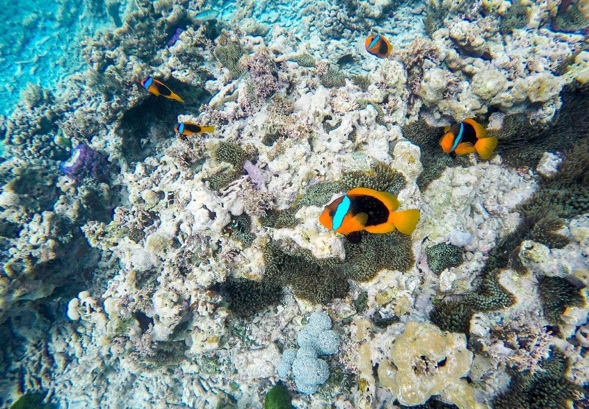 nouvelle-caledonie-snorkeling-piscine naturelle
