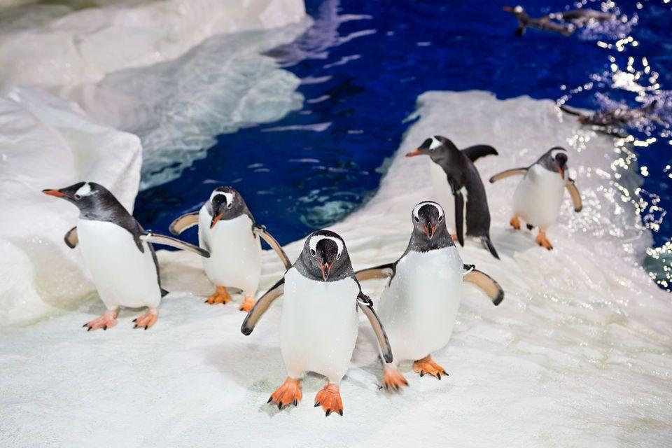 aquarium auckland sea world