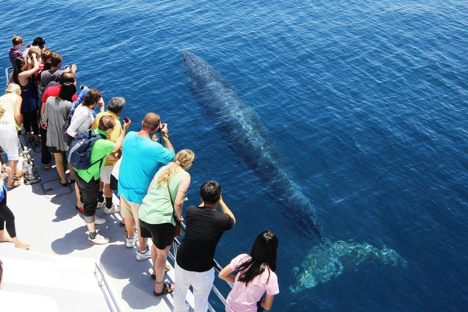 baleine-auckland