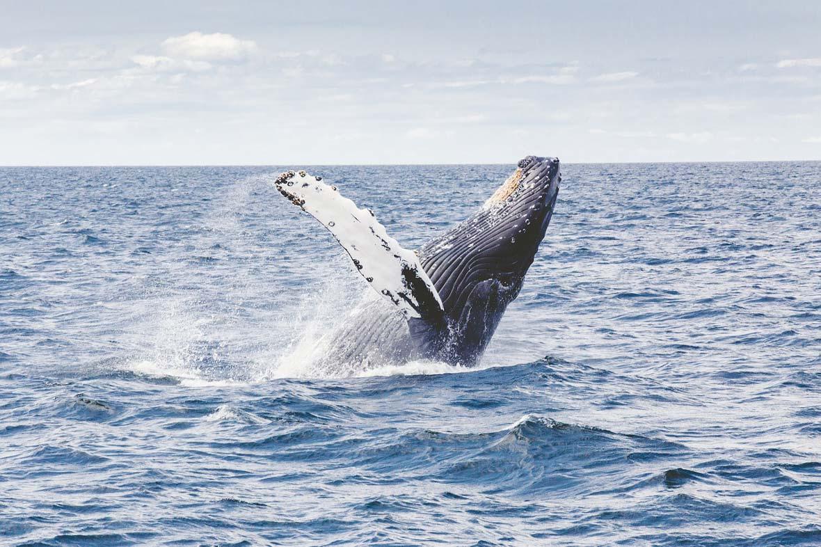 Croisières et observation de baleines à Sydney