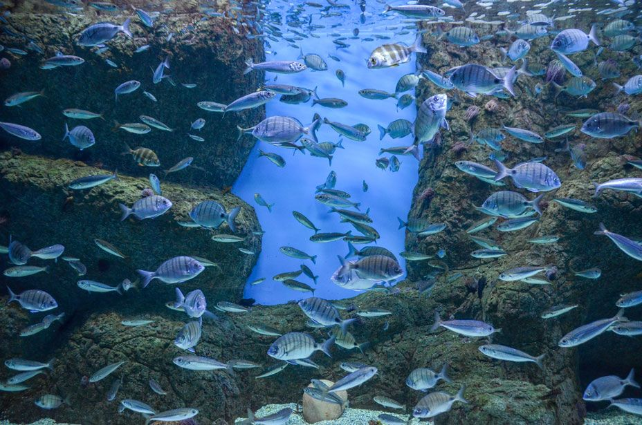aquarium-seville-guadalquivir