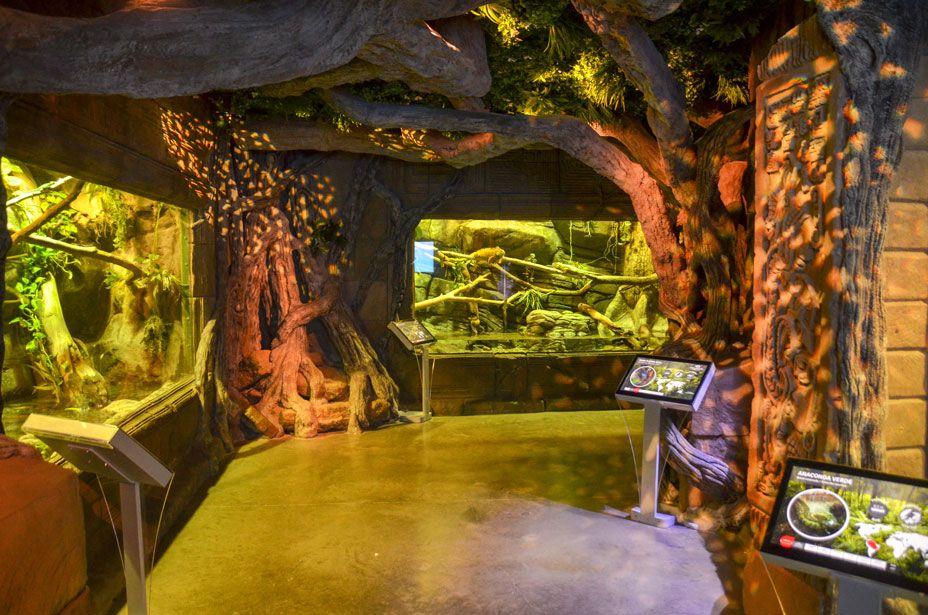 aquarium-seville-reptile
