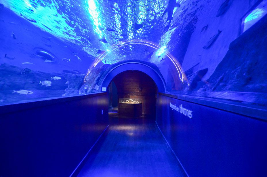 aquarium-seville-tunnel