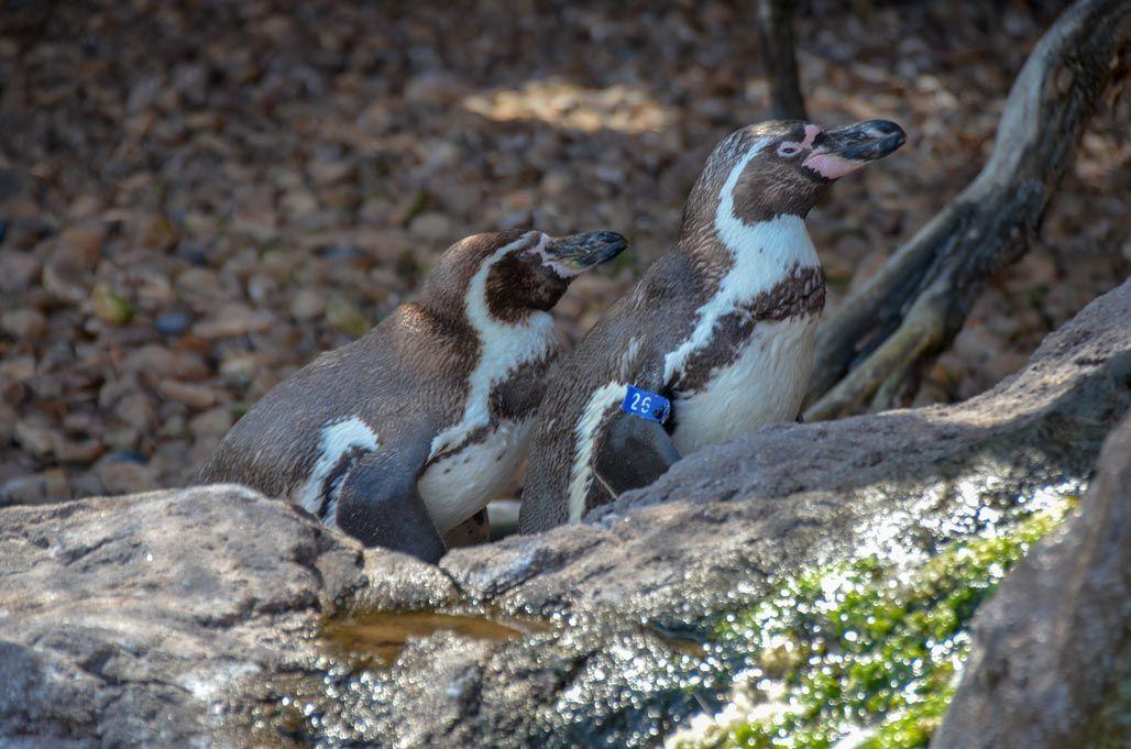 aquarium-valence-pingouin