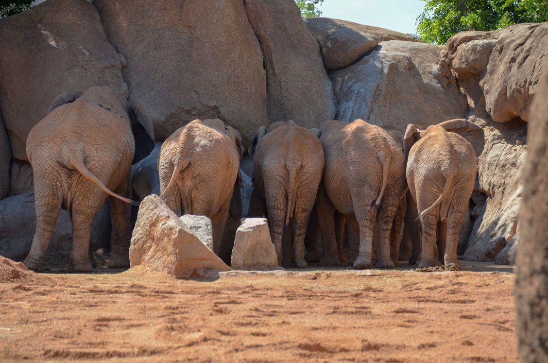elephant-bioparc-valence