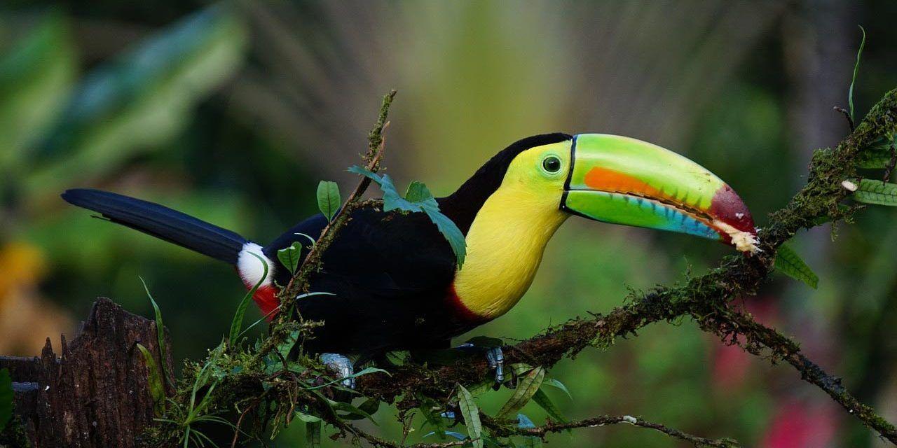 9 lieux incontournables du Costa Rica