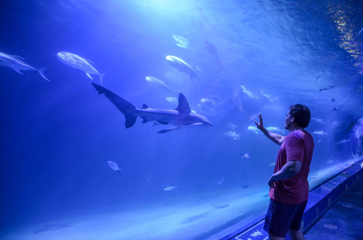 requin-tunnel-aquarium-valence