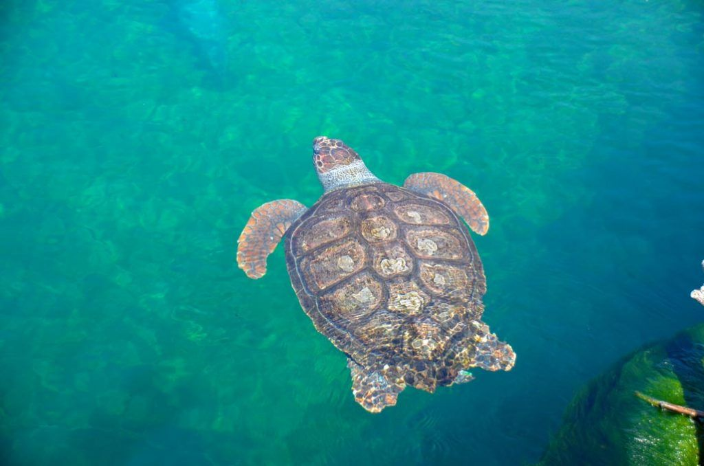 tortue-aquarium-valence