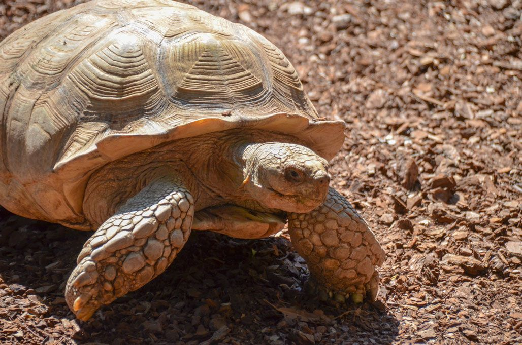 tortue-bioparc-valence