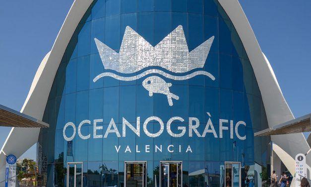 Visiter l'aquarium de Valence : Tout savoir d'une visite à l'Océanografic