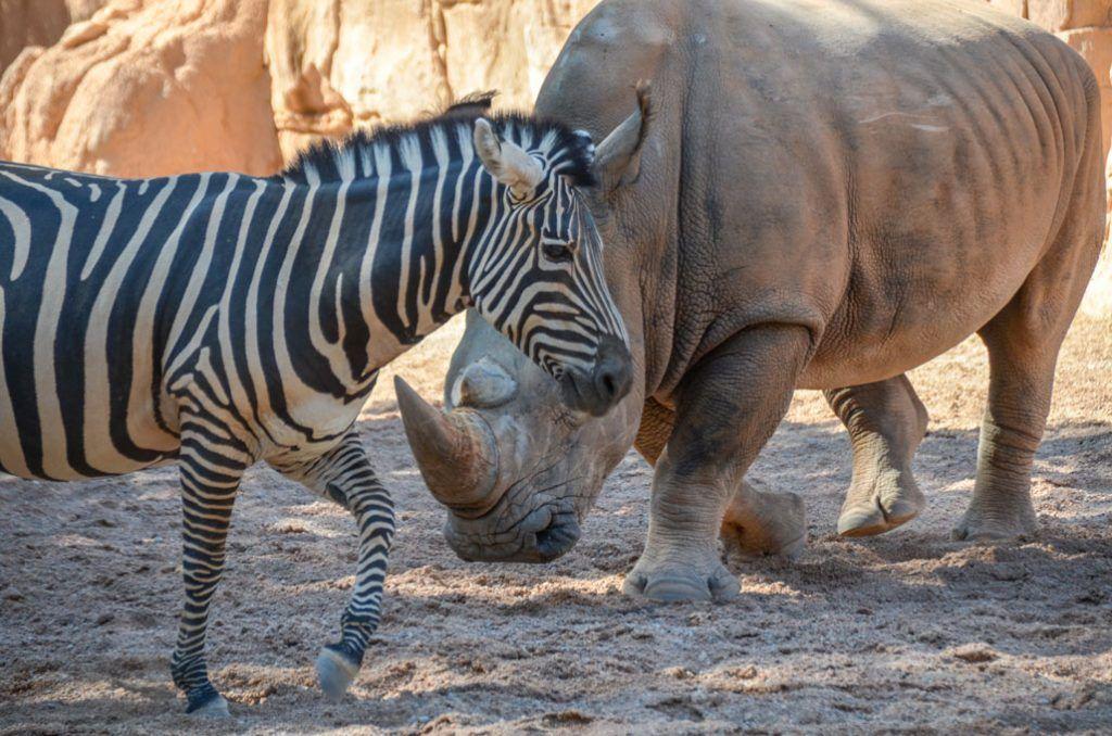 zebre-bioparc-valence