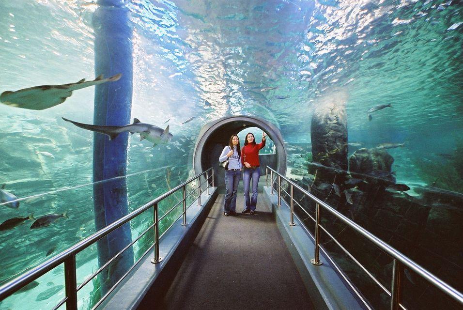 aquarium-melbourne