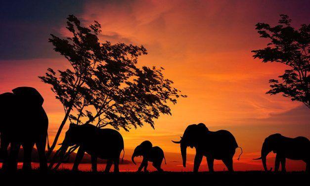 Découvrir le parc du Serengeti en Tanzanie