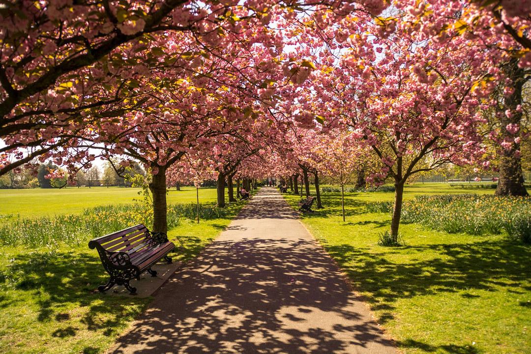 Hyde-Park-Londres