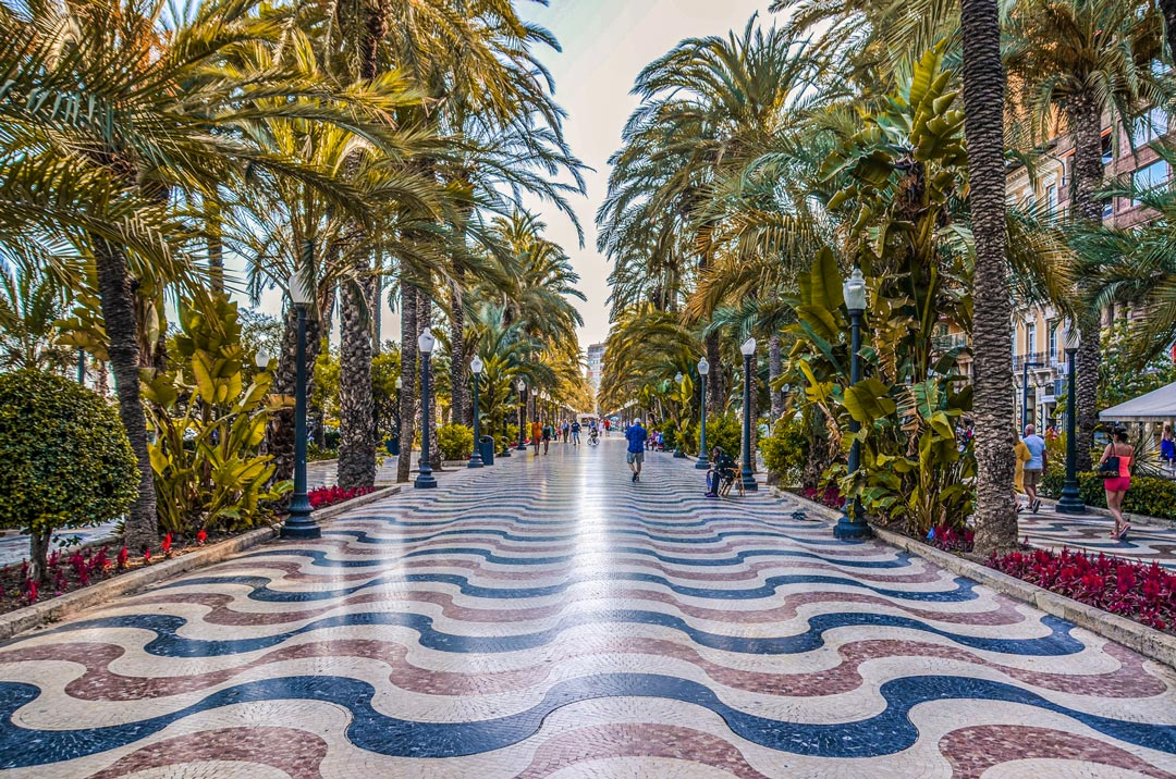 Alicante-palmier-promenade