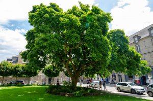 arbre-dinan-eglise-saint-malo