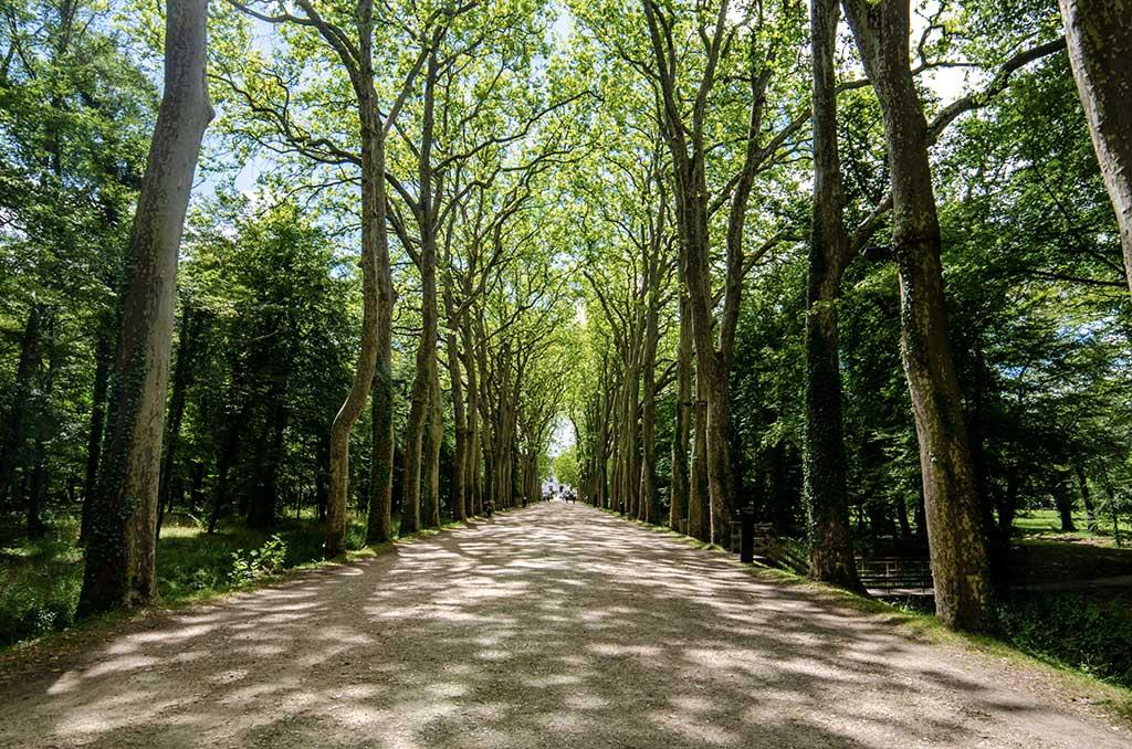 Grande Allée du Château de Chenonceau